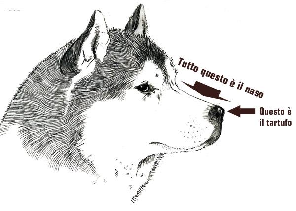 naso_tartufo